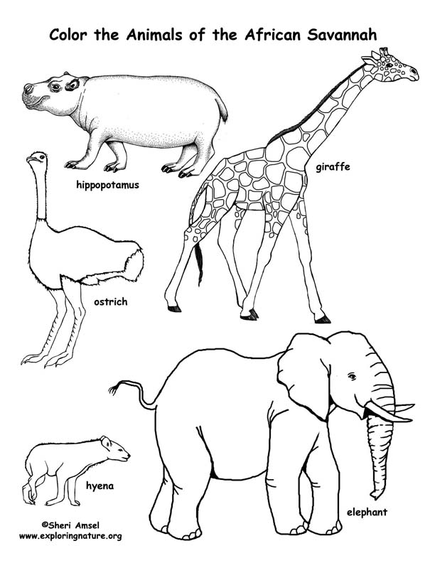 Savanna (African) Animals Coloring Page