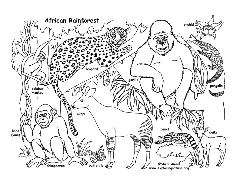 Rainforest (African) Coloring Page