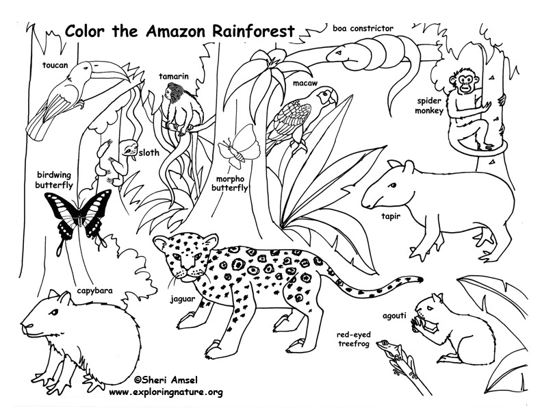 Rainforest (Amazon) Coloring Page