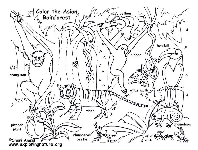 Rainforest (Asian) Coloring Page
