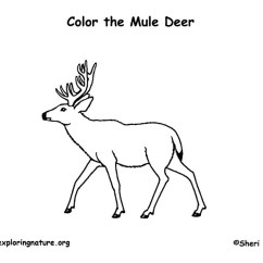 Use Animal Research Diagram Cadet Heater Wiring Smartdetoxnet Deer (mule) Coloring Page