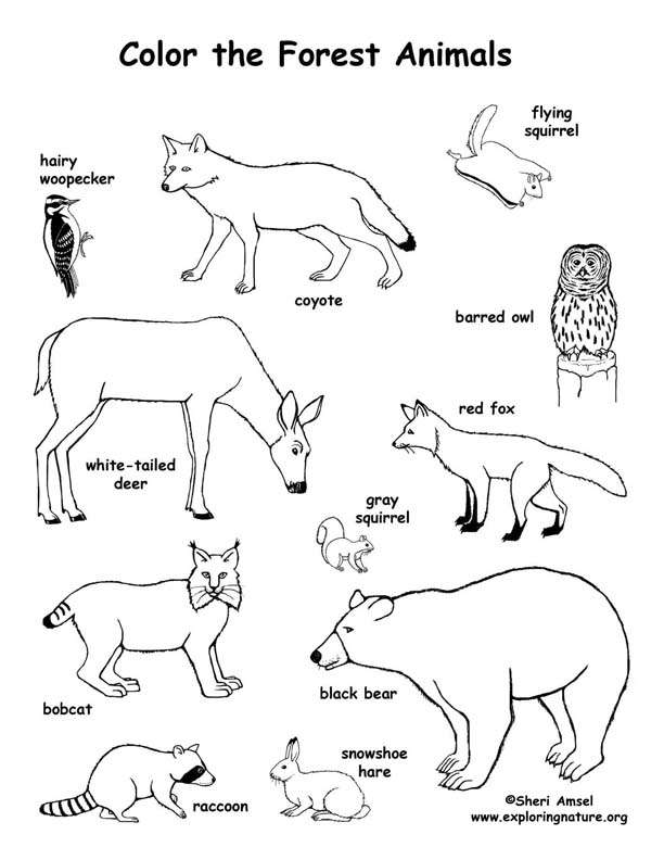 Forest Animals Coloring Page