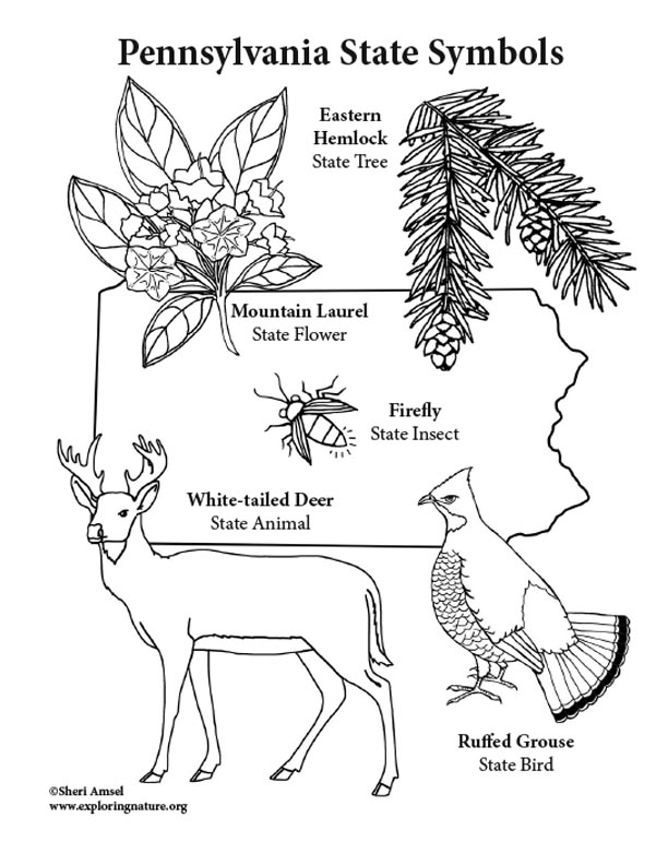 Pennsylvania State Symbols Coloring Page