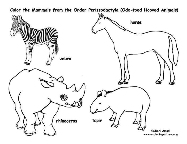 Zebras, Horses, Rhinos, Tapirs (Odd-toed Hooved Mammals