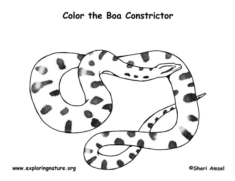 Anaconda Coloring Page
