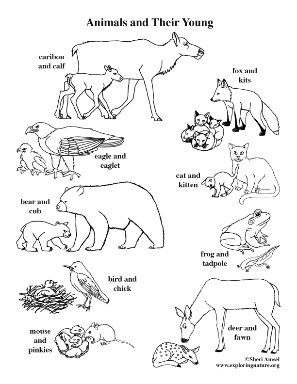 Animals and Their Young Coloring Page