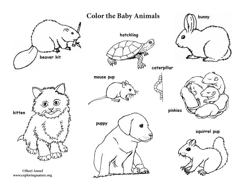 Baby Animal (Labeled) Coloring Page