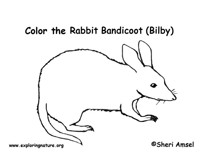 Bandicoot Coloring Page