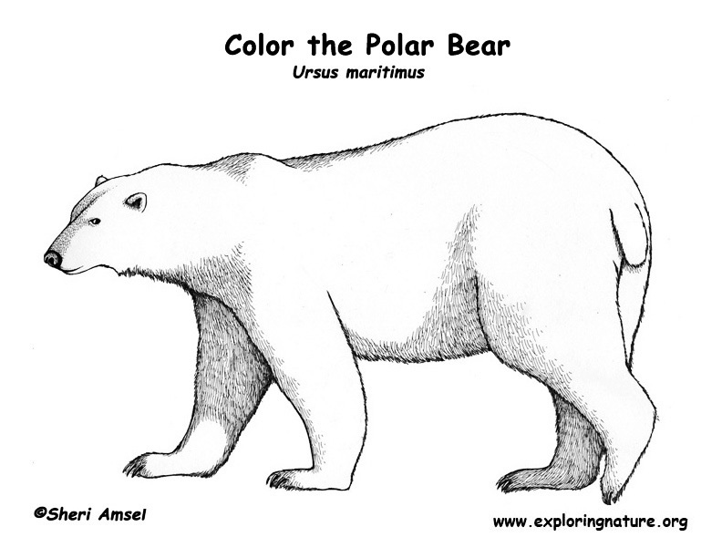 polar bear diagram wiring for universal ignition switch (polar) coloring page