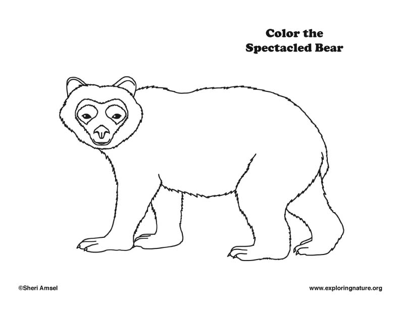 Bear (Spectacled) Coloring Page
