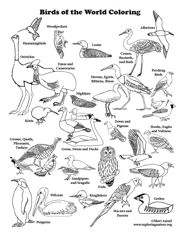 Bird of the World Coloring Page