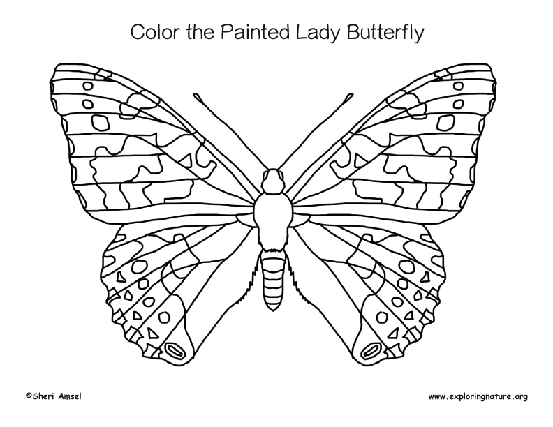 Painted Lady Butterfly Life Cycle Worksheet