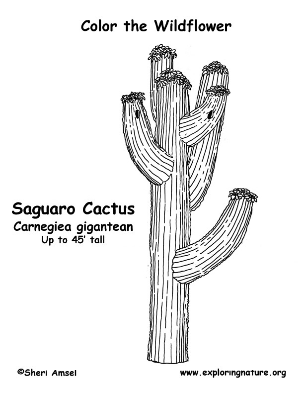 Saguaro Cactus Coloring Page