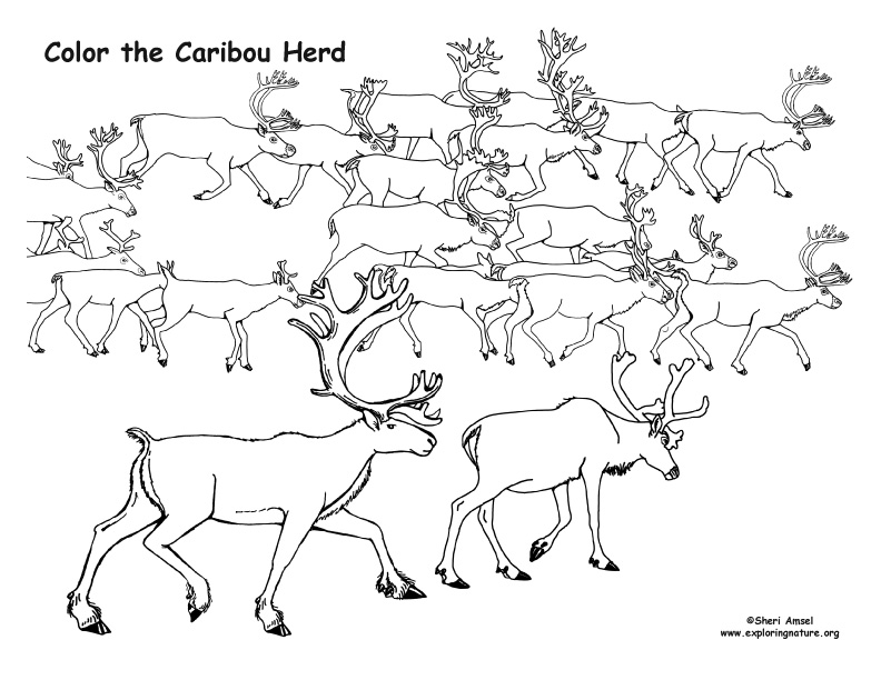 Caribou Herd Coloring Page