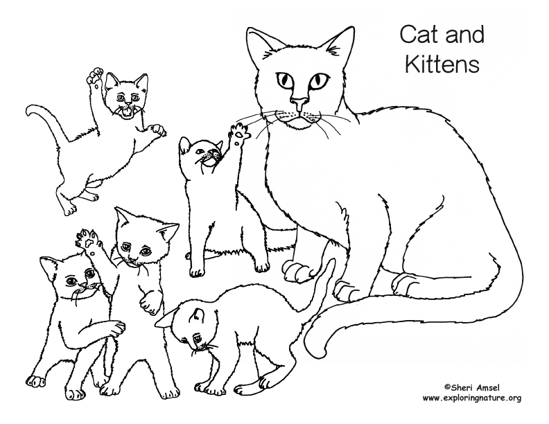 Cat and Kittens Coloring Page