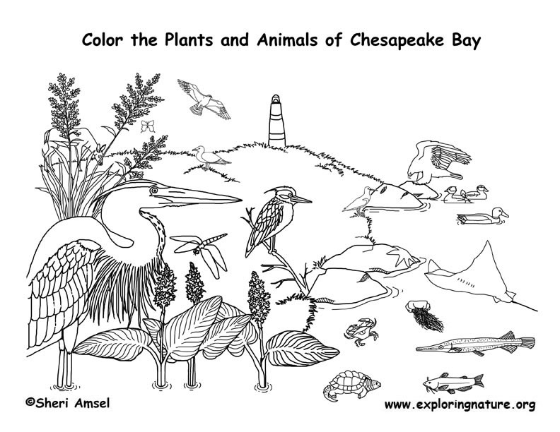 Chesapeake Bay Coloring Page