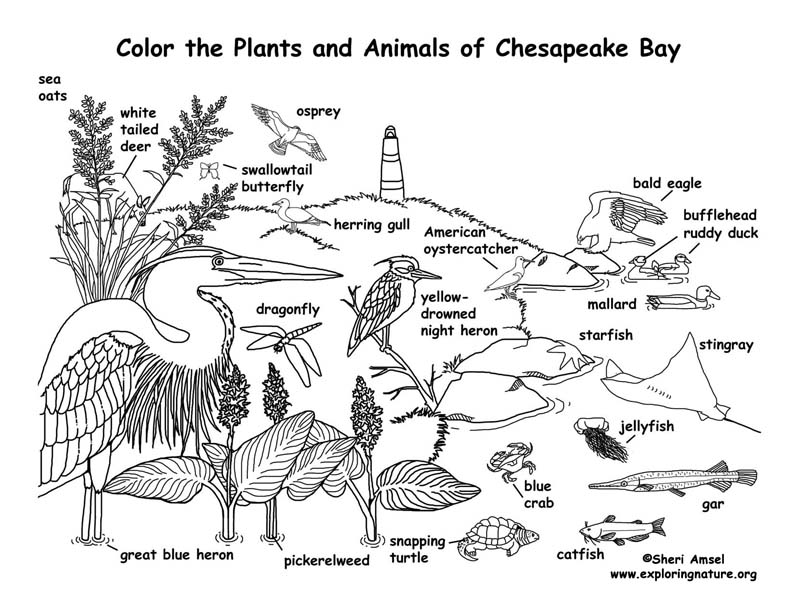 Chesapeake Bay (Labeled) Coloring Page