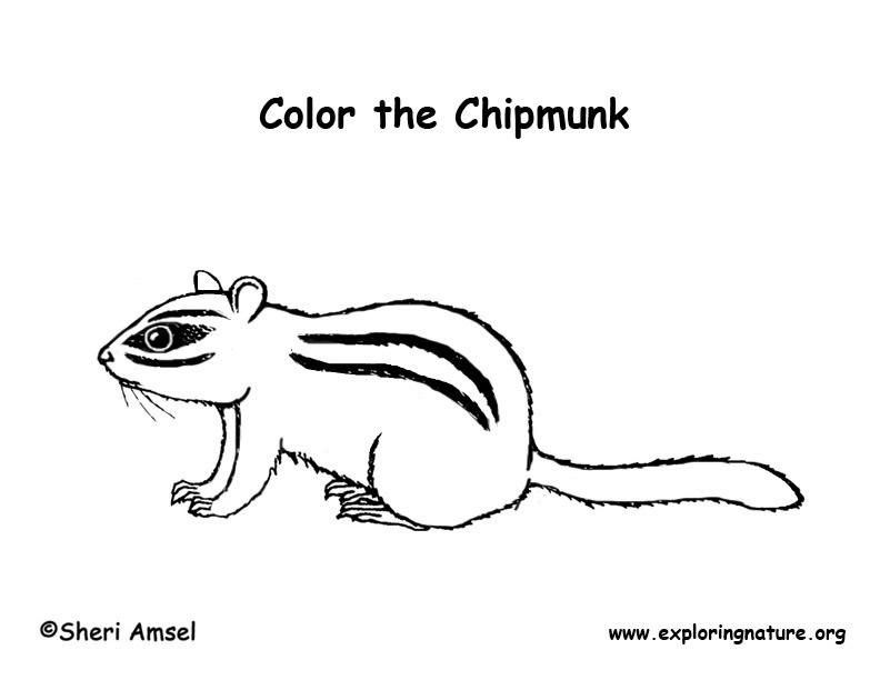Chipmunk Coloring Page