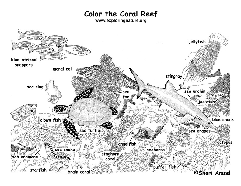 Coral Reef (Labeled) Coloring Page