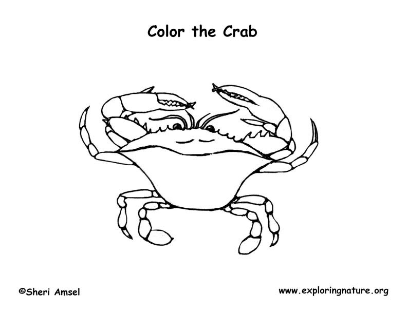 Crab (Blue) Coloring Page