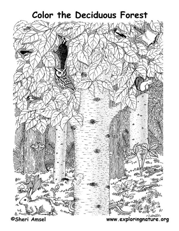 forest coloring page # 16