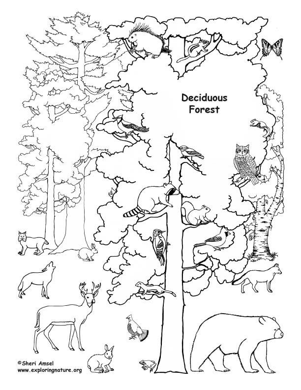 Deciduous Forest with Animals Coloring Page