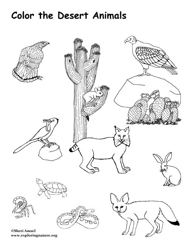 COLORING DESERT PICTURE « Free Coloring Pages