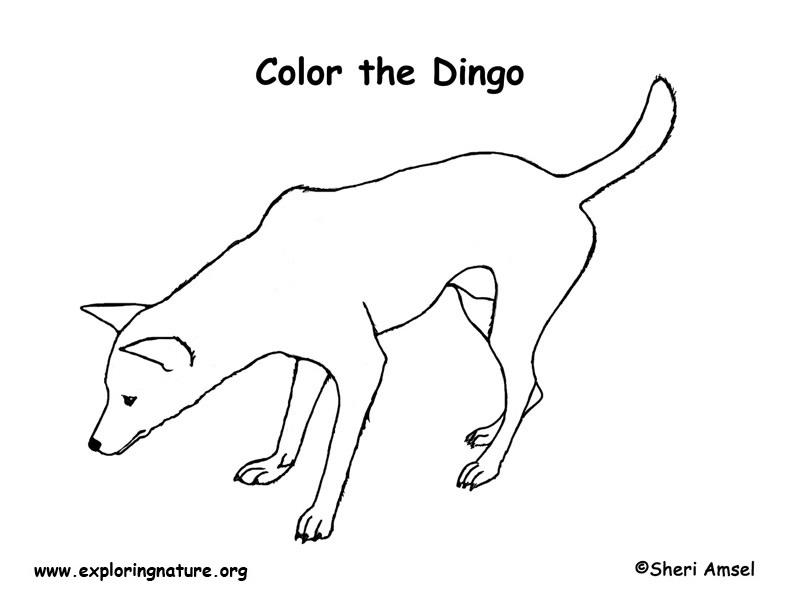 Dingo Coloring Page