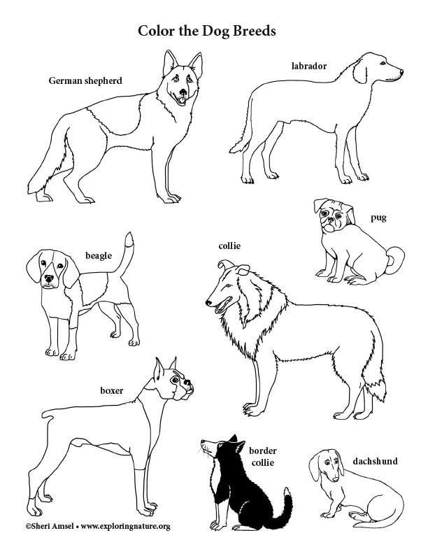 Dog Breeds Coloring