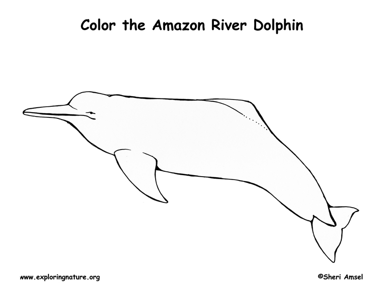 Dolphin (Amazon River) Coloring Page
