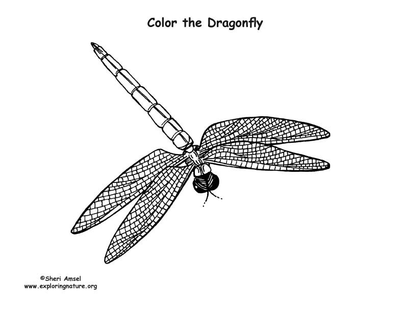 Dragonfly 2 Coloring Page