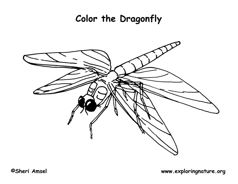 Dragonfly Coloring Page