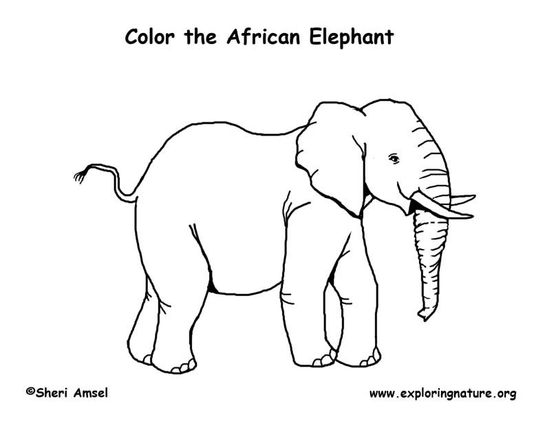 Elephant (African) Coloring Page