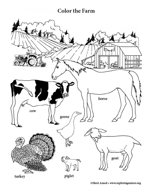Farm 2 Coloring Page