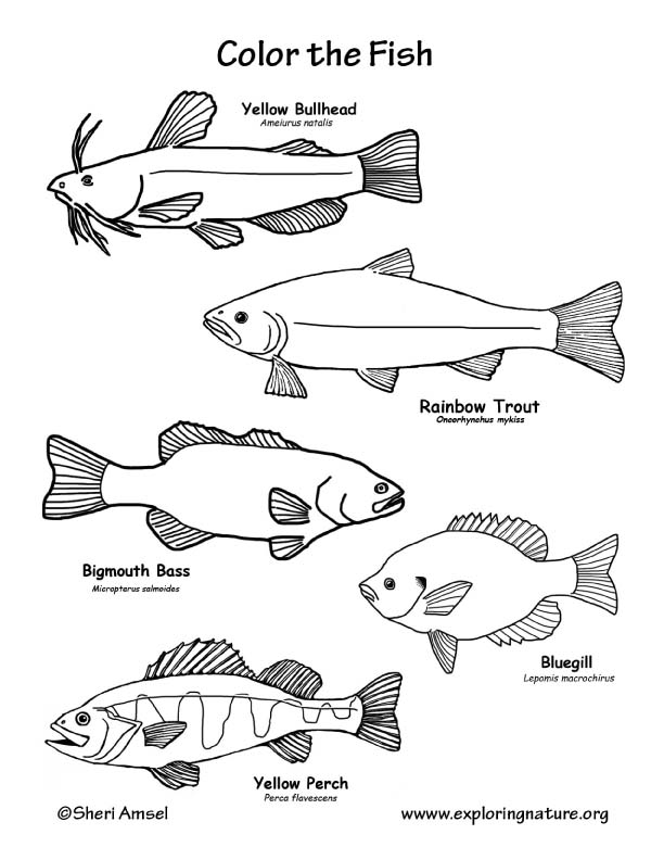 Fish (Freshwater) Coloring Page