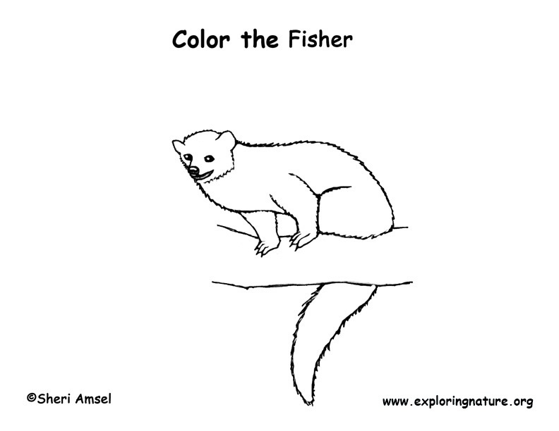 Fisher Coloring Page