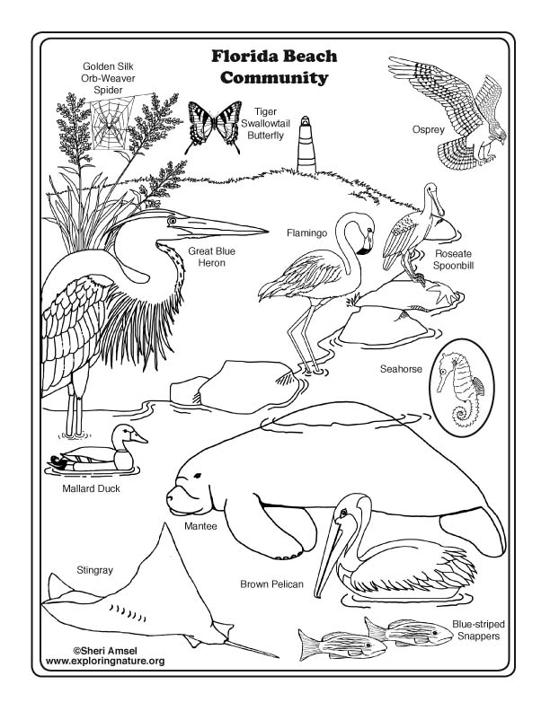 Florida Beach Community Coloring Page