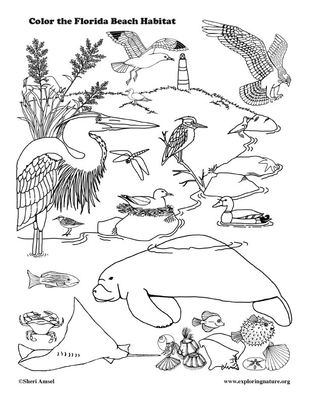 Florida Coastal Animals Coloring Page
