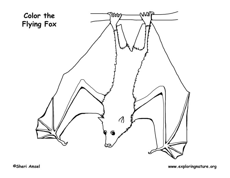 Flying Fox Coloring Page