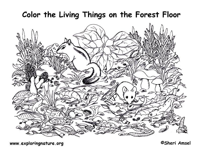 forest floor coloring page