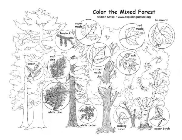 forest coloring page # 13