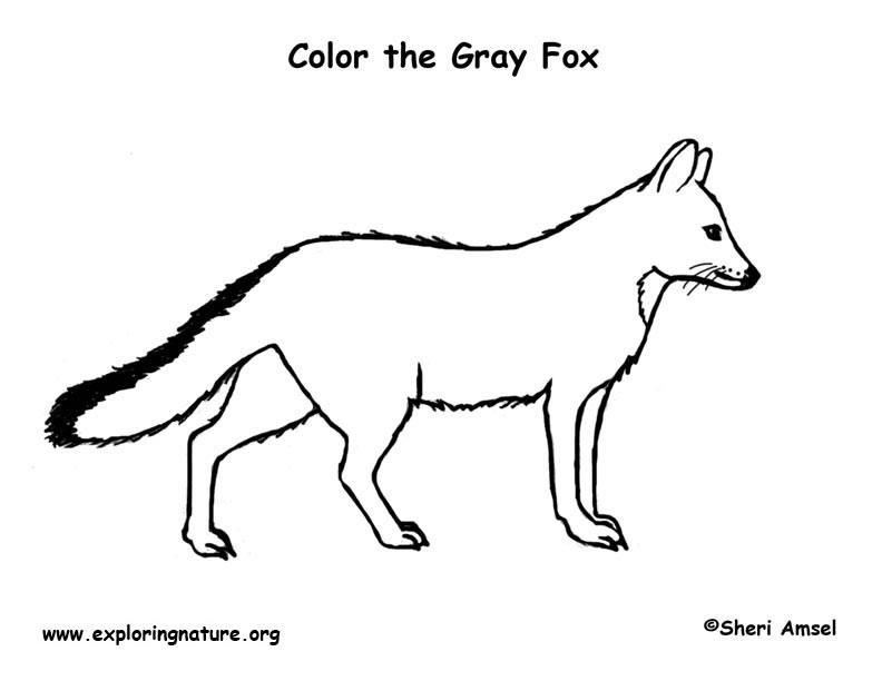 Fox (Gray) Coloring Page