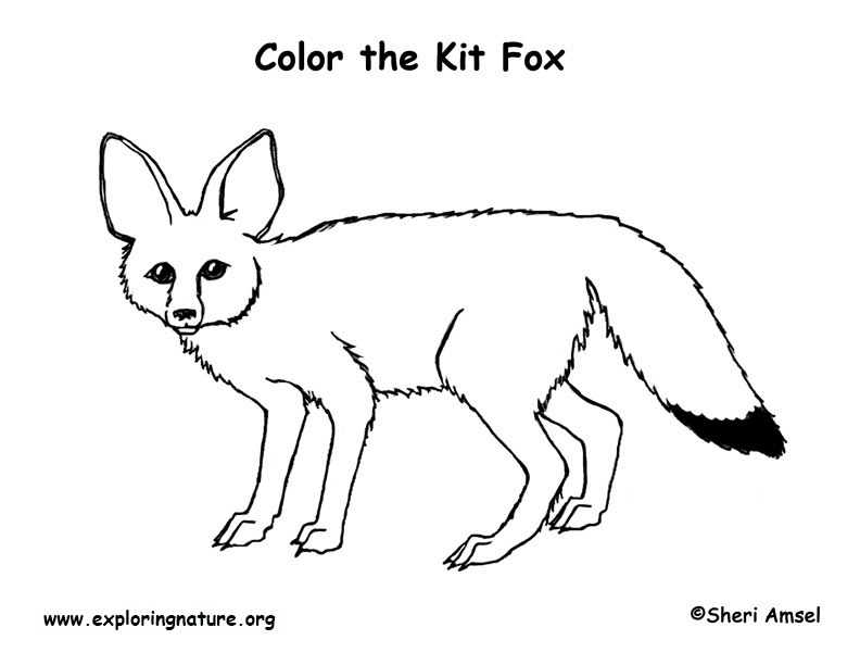 Fox (Kit) Coloring Page