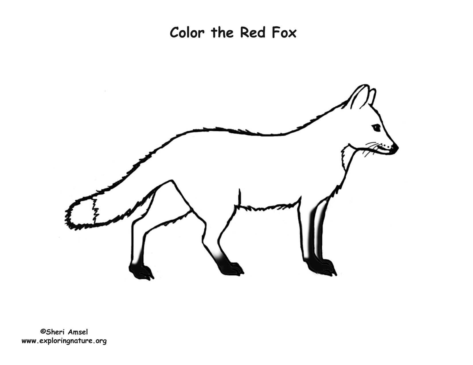 Fox (Red) Coloring Page