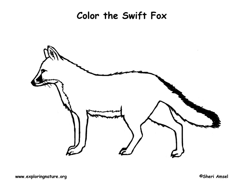 Fox (Swift) Coloring Page