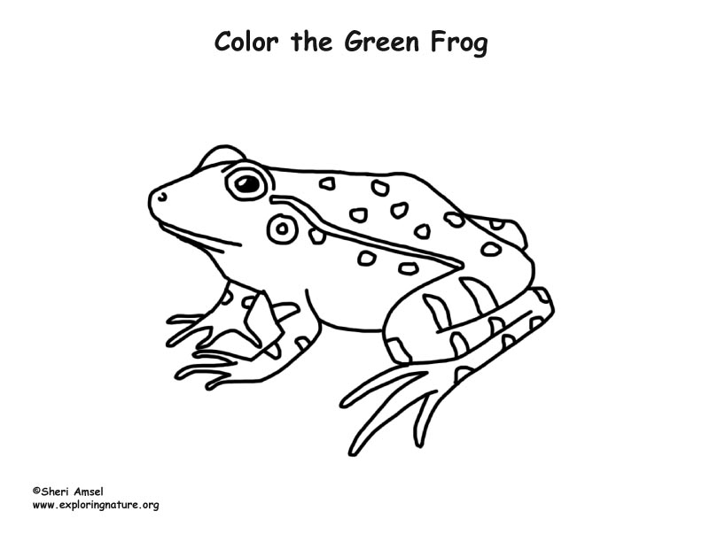 Frog (Green) Coloring Page