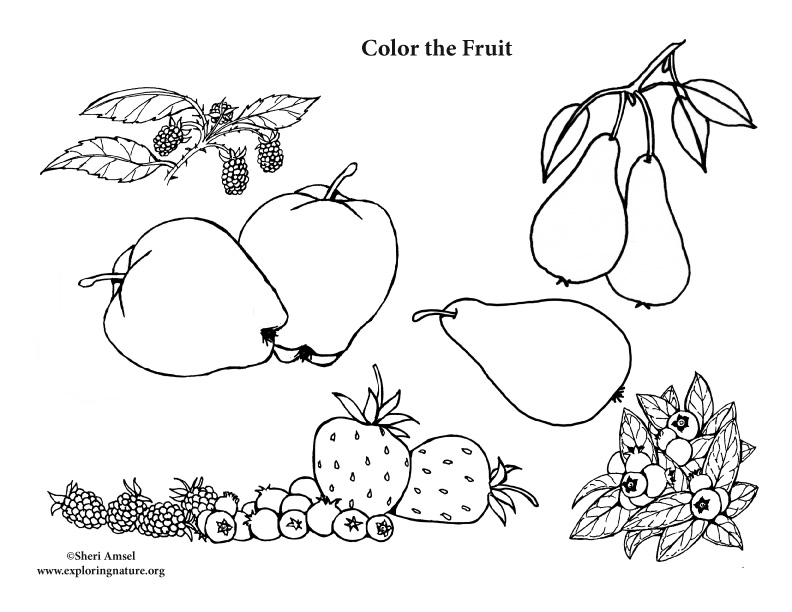 Fruit Coloring Page