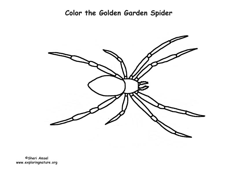 Spider (Golden Garden) Coloring Page