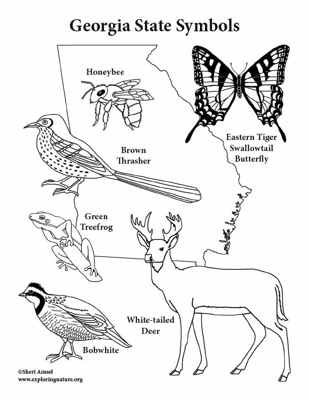 Georgia State Symbols Coloring Page