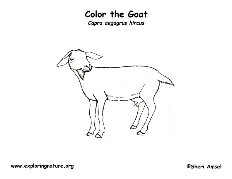 Goat Coloring Page